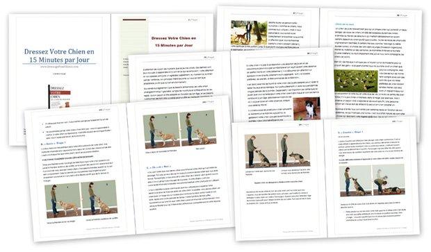 Contenu du livre : clair, précis et détaillé pour devenir un expert dans le dressage canin