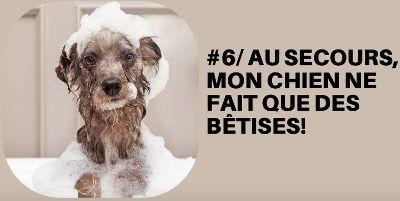 Dresser votre chiot qui fait des bétises avec le dernier module en vidéo de formation du site chienmodedemploi.fr