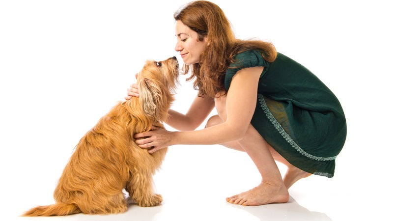 Idée reçue : les chiens adultes ne peuvent plus être éduqués