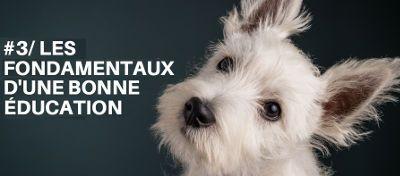 Maîtriser les fondamentaux d'une éducation canine réussie