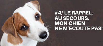 Commebt réagir et gérer les chiens et chiots qui ne vous écoutent pas